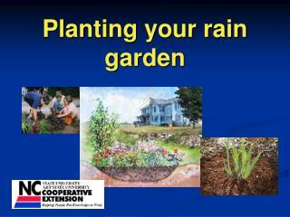 PPT - Planting Your Rain Garden