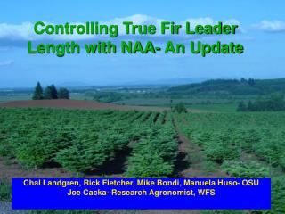Controlling True Fir Leader Length with NAA- An Update