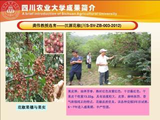龚伟教授选育 —— 汉源花椒 ( 川 S-SV-ZB-003-2012)