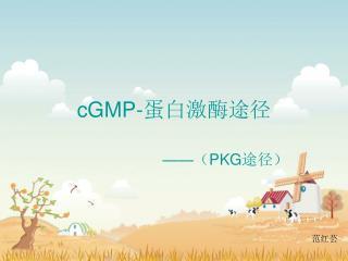 cGMP- 蛋白激酶途径