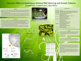 Calcium's Effect on  Arabidopsis thaliana  RNA Silencing and Growth Patterns