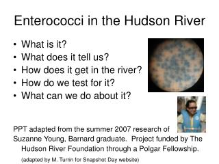 Enterococci in the Hudson River