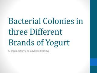 Bacterial  C olonies in three Different Brands of Yogurt