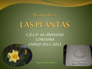 Profundiza LAS PLANTAS