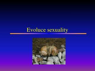 Evoluce sexuality