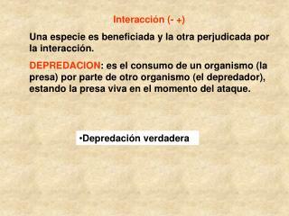 Interacción (- +) Una especie es beneficiada y la otra perjudicada por la interacción.
