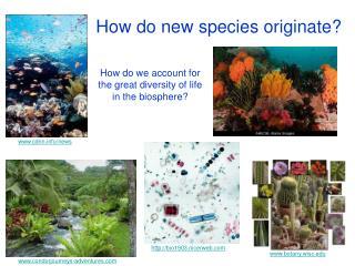 How do new species originate?