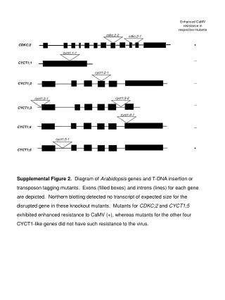 Enhanced CaMV resistance in respective mutants