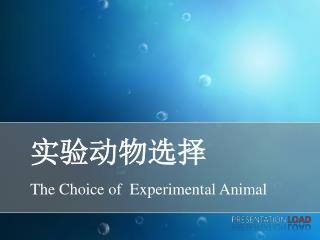 实验动物选择