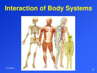Interaction of Body Systems