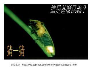 圖片來源: web.cdps.tpc.tw/firefly/aabout/aabouta1.htm