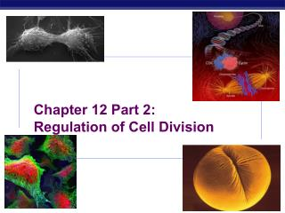 Chapter 12 Part 2:  Regulation of Cell Division