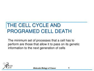 THE CELL CYCLE AND PROGRAMED CELL DEATH