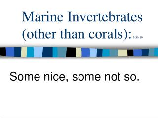 Marine Invertebrates (other than corals):  3-30-10