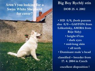Aren´t you looking for a   Swiss White Shepherd for cover?