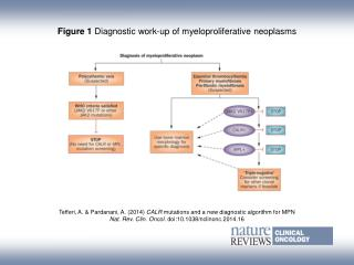 Figure 1  Diagnostic work-up of myeloproliferative neoplasms