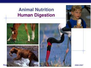 Animal Nutrition Human Digestion
