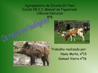 Agrupamento de Escolas Gil Paes Escola EB 2.3. Manuel de Figueiredo Ciências Naturais 8ºB