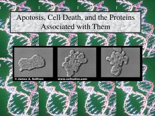 Apotosis, Cell Death, and the Proteins Associated with Them