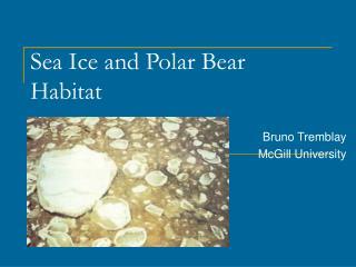 Sea Ice and Polar Bear Habitat