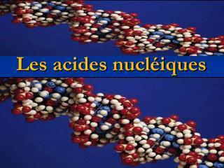 Les acides nucléiques