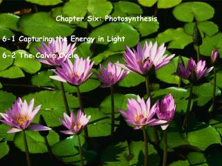 Chapter Six: Photosynthesis