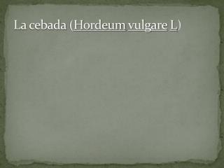 La cebada  ( H ordeum vulgare L )