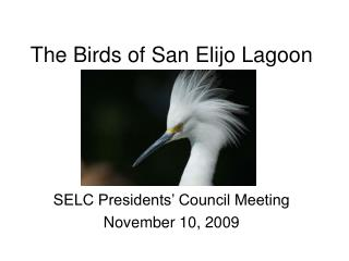 The Birds of San Elijo Lagoon