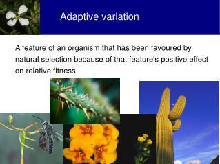 Adaptive variation