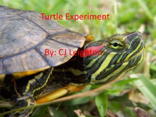 Turtle Experiment