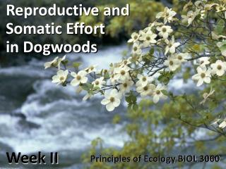 Reproductive and  Somatic Effort  in Dogwoods Week II