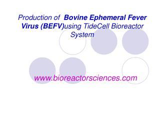 Production of   Bovine Ephemeral Fever Virus (BEFV) using TideCell Bioreactor System
