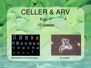 CELLER & ARV