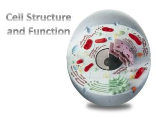 Cell Structure a nd Function