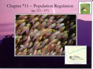 Chapter  # 11 – Population Regulation (pg. 223 – 237)