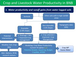 Water productivity and runoff gains from water logged soils