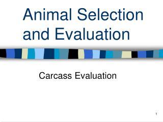 Animal Selection and Evaluation