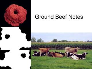 Ground Beef Notes