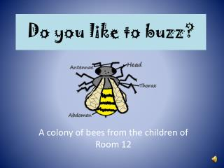 Do you like to buzz?