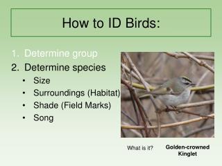 Week 1 - The Art of Birding part 3 Presentation