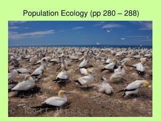 Population Ecology (pp 280 – 288)