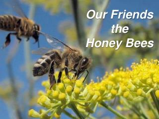 Our Friends the  Honey Bees