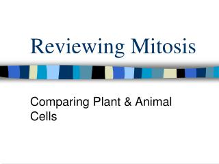 Reviewing Mitosis