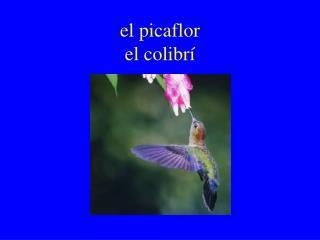el picaflor  el colibr í