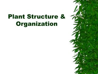 Plant Structure & Organization