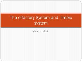 The olfactory System and  limbic system