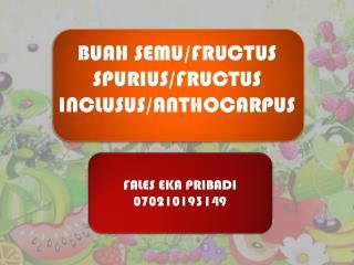 FALES EKA PRIBADI 070210193149