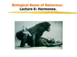 Biological Bases of Behaviour.   Lecture 6: Hormones.