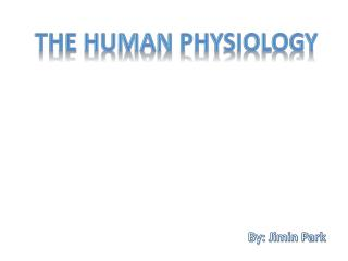 The Human Physiology