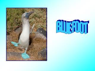 BLUE FOOT